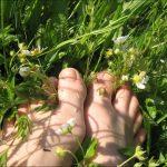 Травы при варикозном расширении вен — отзывы