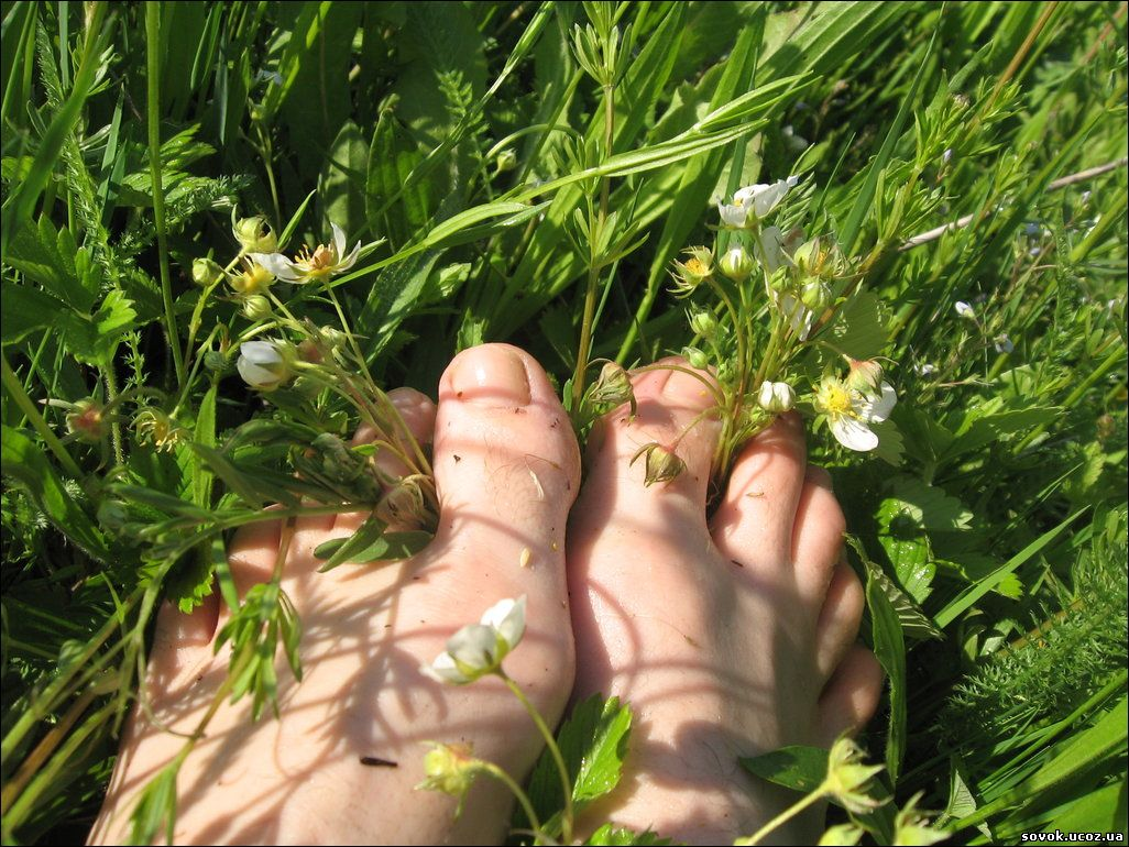 травы при варикозе